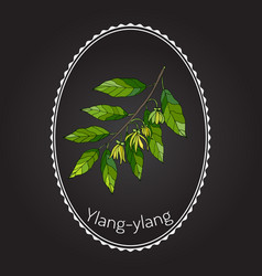 Branch ylang-ylang vector