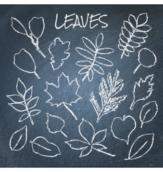 collection chalk leaves vector image