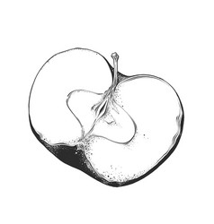 hand drawn sketch of half apple in black color vector image