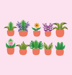 Isolated houseplants inside pots design vector