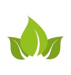 Leaves natural plant sheet vector