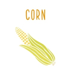 Corn isolated on white vector image vector image