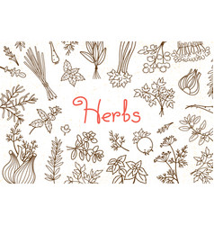 background with various herbs used in cooking and vector image