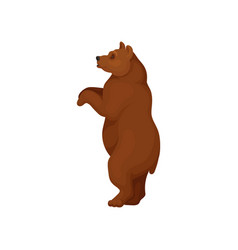 Big bear standing on two hind legs side view vector