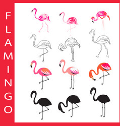 Flamingo birds set cartoon outline and vector