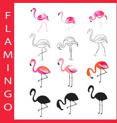 flamingo birds set cartoon outline vector image