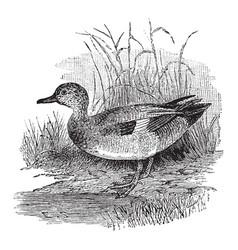 Gray duck vintage vector