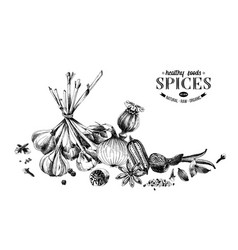 hand drawn spices border can be used for poster vector image