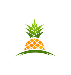 Pineapple fruit icon template vector