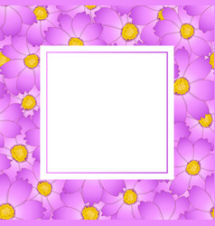 pink cosmos flower banner card vector image