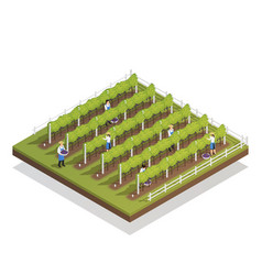 Viticulture isometric composition vector