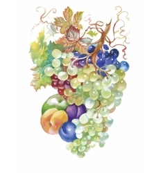 Hand drawn watercolor painting of fruits vector image