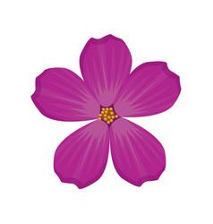 plumeria flower spring image vector image vector image