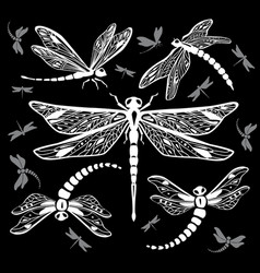 set of decorative dragonflies vector image