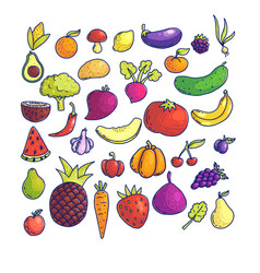 colorful graphic collection of fruit and vegetable vector image