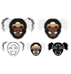 Common marmoset monkey in face view vector