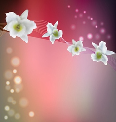flower background with blossom orchid vector image