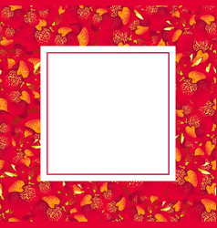 red canna lily banner card vector image