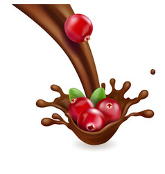 Red cranberry in splash of chocolate vector