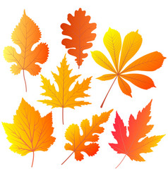 autumn leaves of chestnut oak currant mulberry vector image