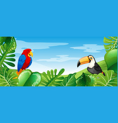 bied in wild forest vector image