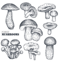 Collection hand drawn mushrooms in vector