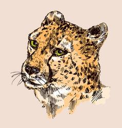 Hand-drawn cheetah vector
