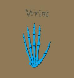Human organ icon in flat style wrist bone vector