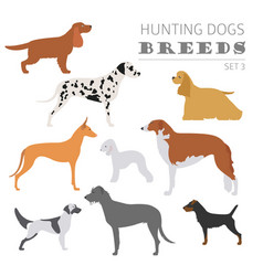 hunting dog breeds collection isolated on white vector image