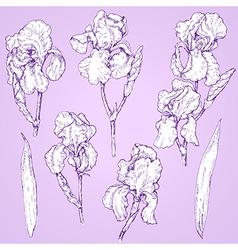 iris doodle set vector image vector image