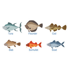 Collection fish species with name subscription vector