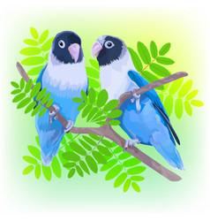 Pair of blue masked lovebirds vector