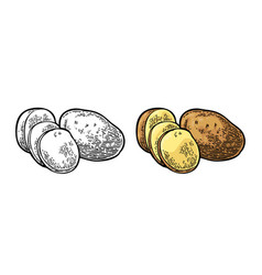 potato whole and slice engraving vintage vector image
