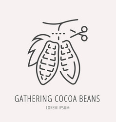 Simple logo template gathering cocoa beans vector