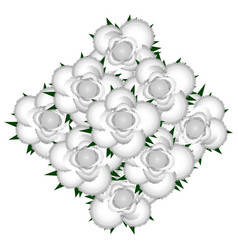 bouquet of white roses icon vector image