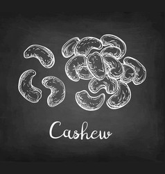 Chalk sketch of cashew vector