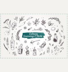 culinary seasonings and herbs hand drawn icons vector image