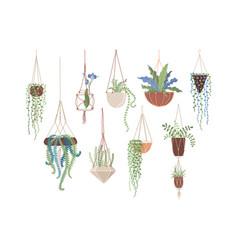 Houseplants in hanging pots flat set vector