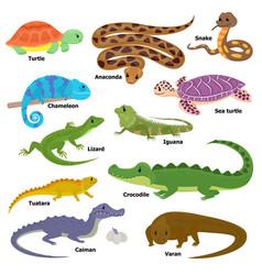 Reptile animal reptilian character lizard vector