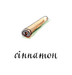 watercolor cinnamon stick vector image