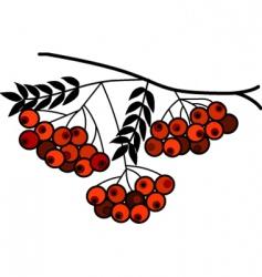 berries on branch vector image vector image