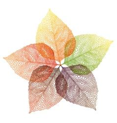 Autumn leaves flower vector