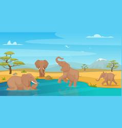 elephant drink water savanna wild animals walking vector image
