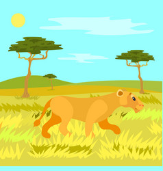 Jungle safari wild nature and animal lioness vector