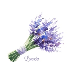 Watercolor bouquet of lavender vector