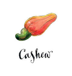 Watercolor red cashew vector