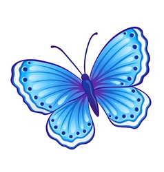 butterfly graphic vector image vector image