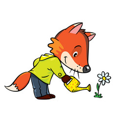 little funny fox watering flower vector image