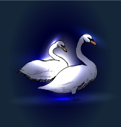Swans on a blue background vector image