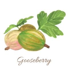 Hand drawn of gooseberry vector